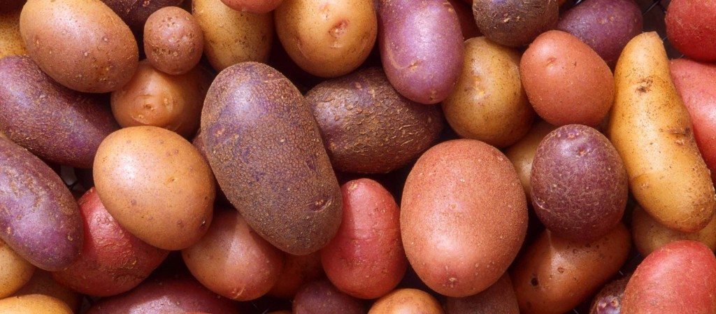 Patates-1024x449