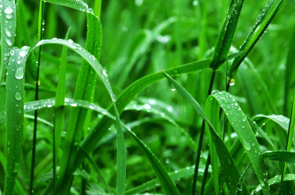 grass-rain-drops-83249