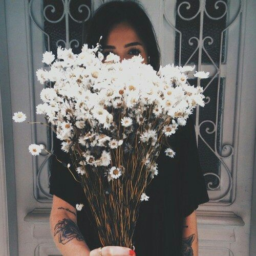 background-black-daisy-flowers-Favim.com-2325197